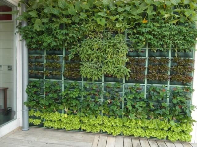 Mini Giardino Sul Balcone : Come creare un mini orto sul balcone con le piante nane