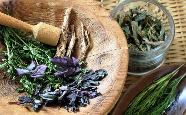 4 piante curative con le proprietà giuste per affrontare il cambio di stagione