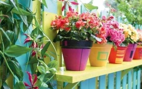 piante vasi colorati