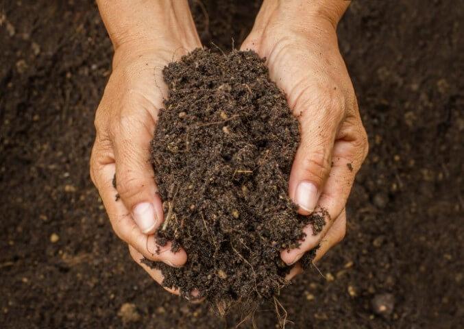 sabbia per piante terriccio