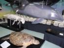 鯨類展示室③