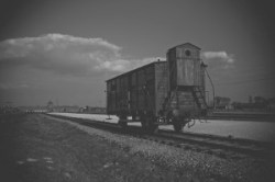 auschwitz train carriage