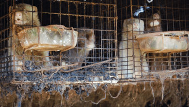 Ask Ireland to ban fur farming: sign our letter