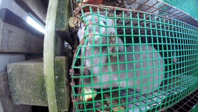 Urge Bulgaria to ban fur farming