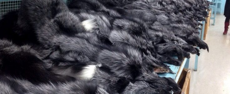 How many animals have to die for a fur coat?