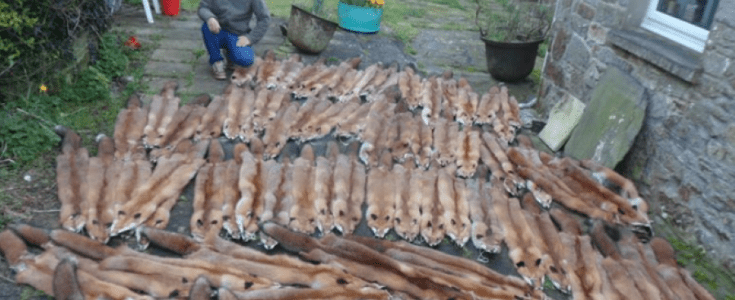 'Sickening' fur trapper in Wales prompts calls for Welsh Government action