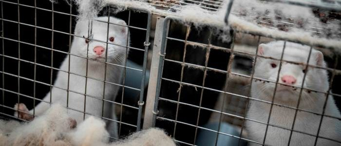 Kopenhagen Fur to close