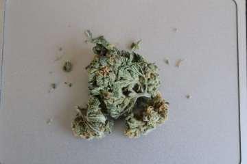 Cannabis Strain of the Week: Super Silver Lemon Haze | Review