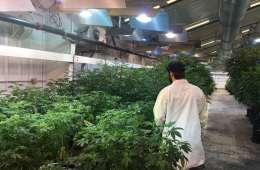 A Tour of Liberty Reach's Weed Farm in Raymond, Washington