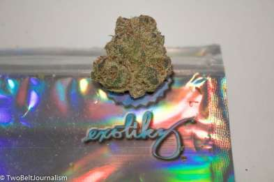 Reviewing The Tangie Cookies Strain From Exotikz