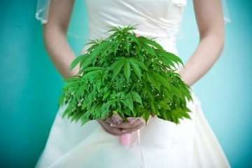 Is The Wedding Cake Weed From Exotikz Worth Your Money?