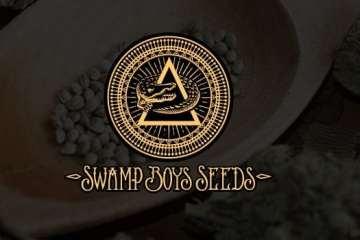 swamp boys cannabis strains