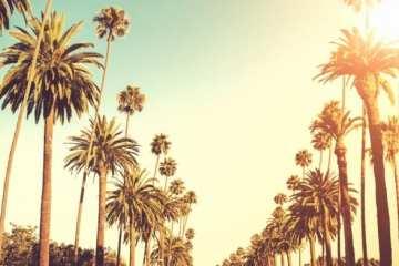 L.A Spotlight | | Learn About Shoreline Mafia, Trizz, G Perico, And More!