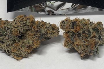 candy breath portland oregon cannabis urban canna