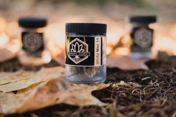 West Coast Weed Tour Washington Awards: Best Flower In Washington White Mac 11 Is a Beautiful Blend Of The White And MAC