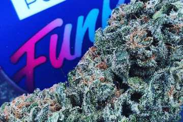 Good Karma Coalition (GKC) Gives Brands Such As Pure Funk To Focus On Artisanal Growing