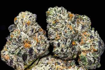 The Skunky Samoas Strain Takes Its GSC Lineage To The Next Level