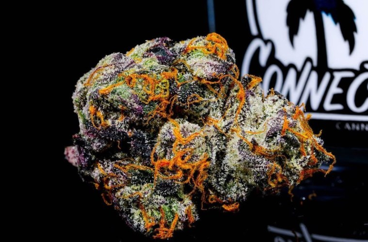 Gushers Strain: A Euphoric Blast Of Exotic Tropical Berry Terps