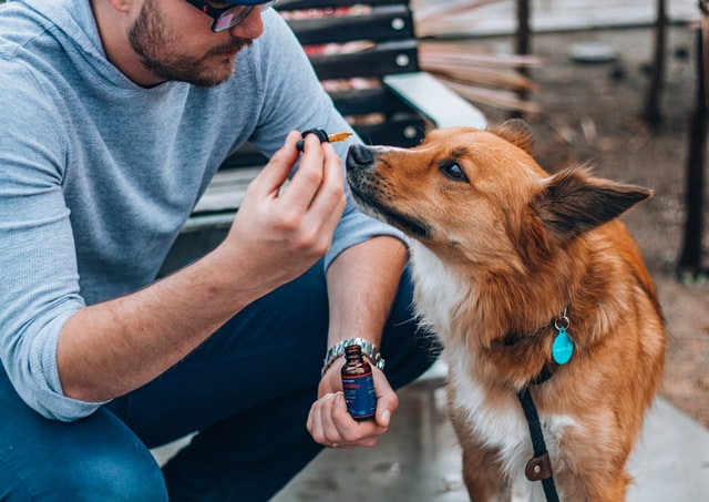 Man holding up dropper bottle of pet-friendly product. Dog sniffing dropper.