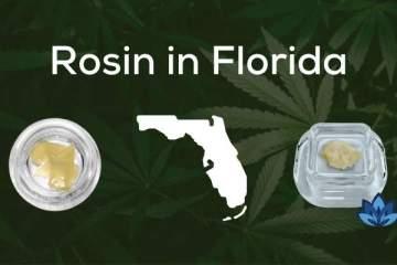 6 Florida Weed Dispensaries that Offer Rosin