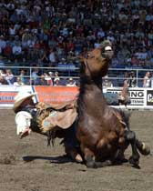 Bare back, animal welfare issues at rodeos