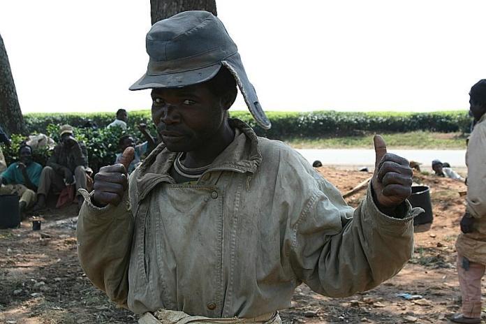 Tea estates workers in Mulanje