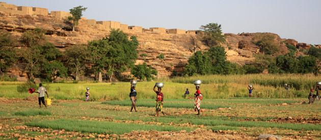 Rice planters in Karonga