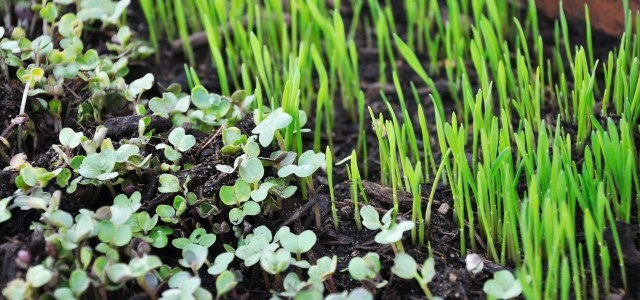 Why Microgreens Are the Superfood You've Been Waiting For