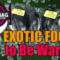Exotic Foods to Be Wary Of
