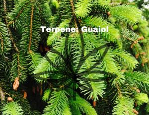 Restart CBD Guaoil Terpene