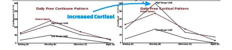 Increased cortisol causes weight gain