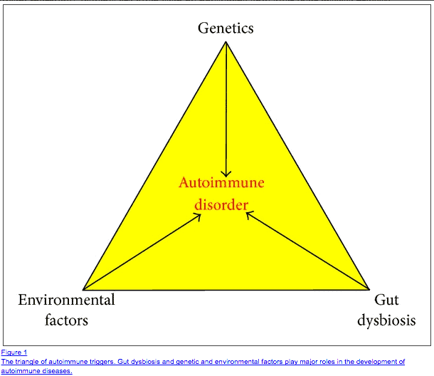 autoimmunity and the gut