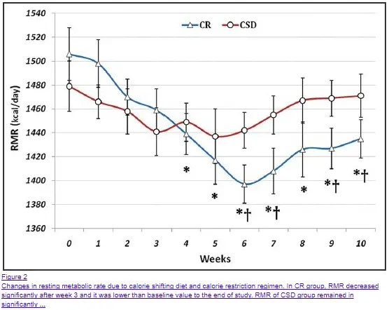 calorie restriction causes a reduction in resting metabolic rate over time