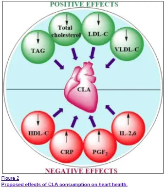 metabolic effects of CLA on the heart