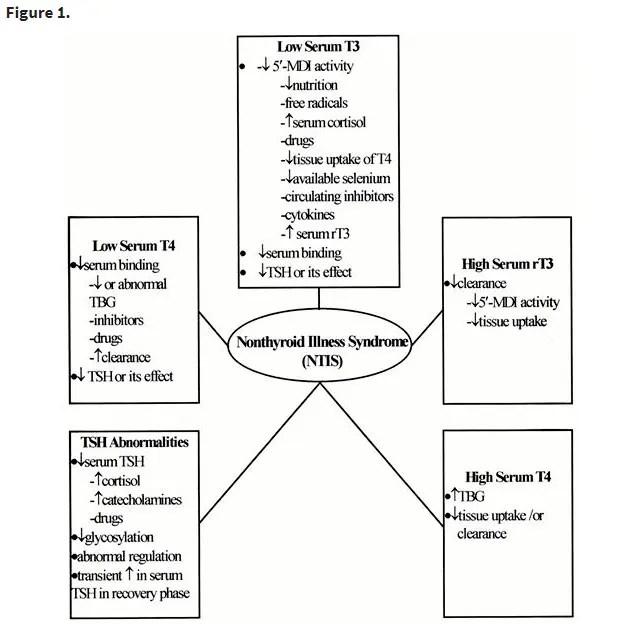 pathogenesis of euthyroid sick syndrome