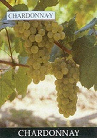 Vinuri in lume: Ungaria