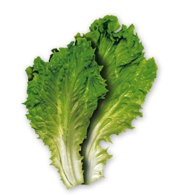 Salată verde cu castraveţi si smantană