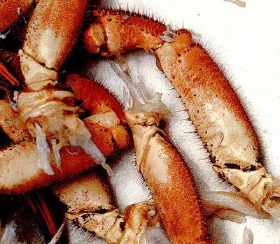 Crabi in sos cu miere