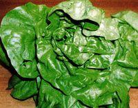 Salara verde cu masline