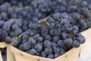 Seasonal Eats: Concord Grapes