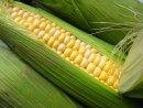 Seasonal Eats: Sweet Corn