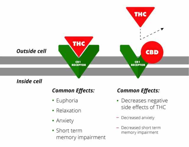 Difference in CBD products with CBD and without - Shop Premium Hemp Derived Products at Restorative CBD
