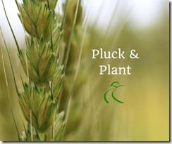 pluck&plant