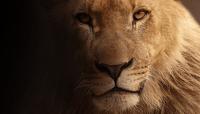 Lion_200
