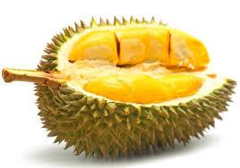 Jenis Durian Yang Paling Enak Dan Paling Disuka Banyak Orang