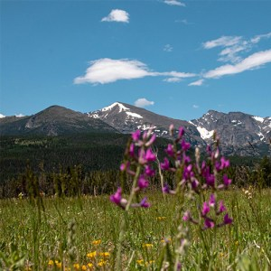 Wildflowers in front of mountains