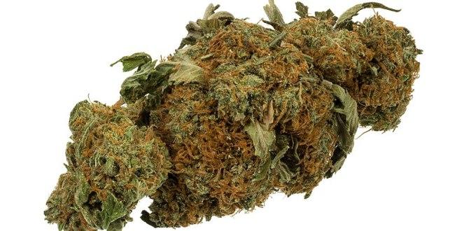 800px-Marijuana-Cannabis-Weed-Bud-Gram