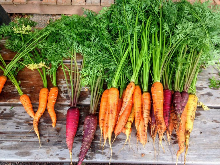 Can Carrots Really Make You See In The Dark?
