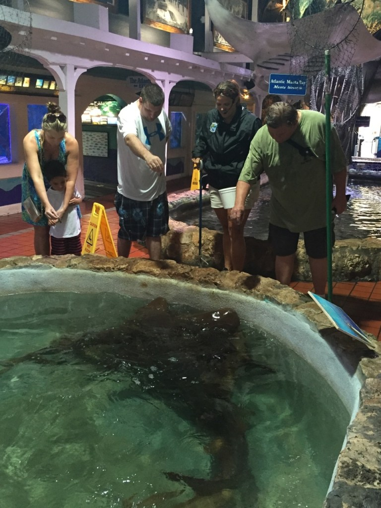 Feeding 6 foot sharks!