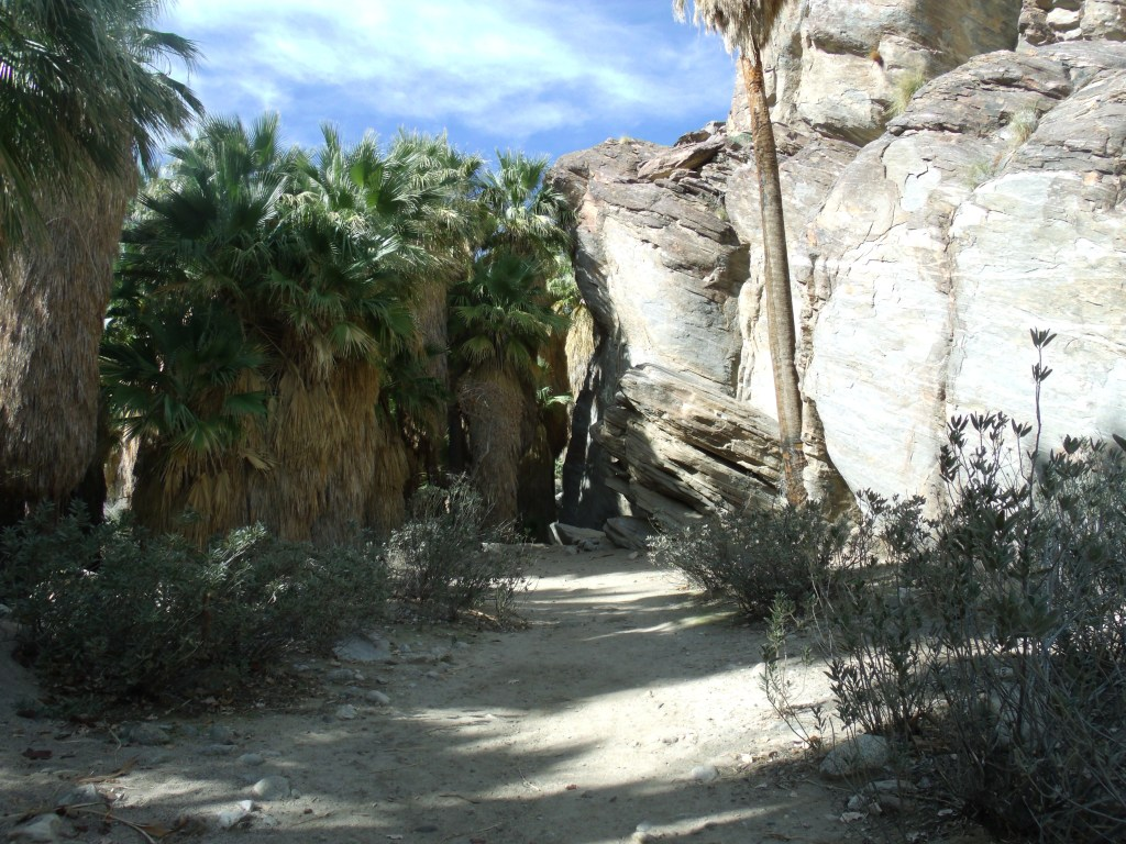Andreas Canyon Trail